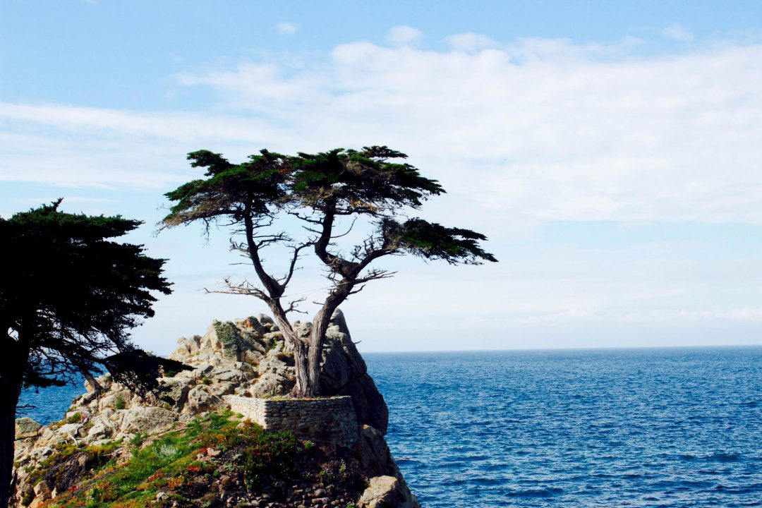 Driving Big Sur // 5 Tips for Your Highway One Road Trip