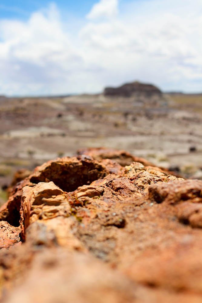 Log Looking Out Petrified Forest National Park Arizona USA.