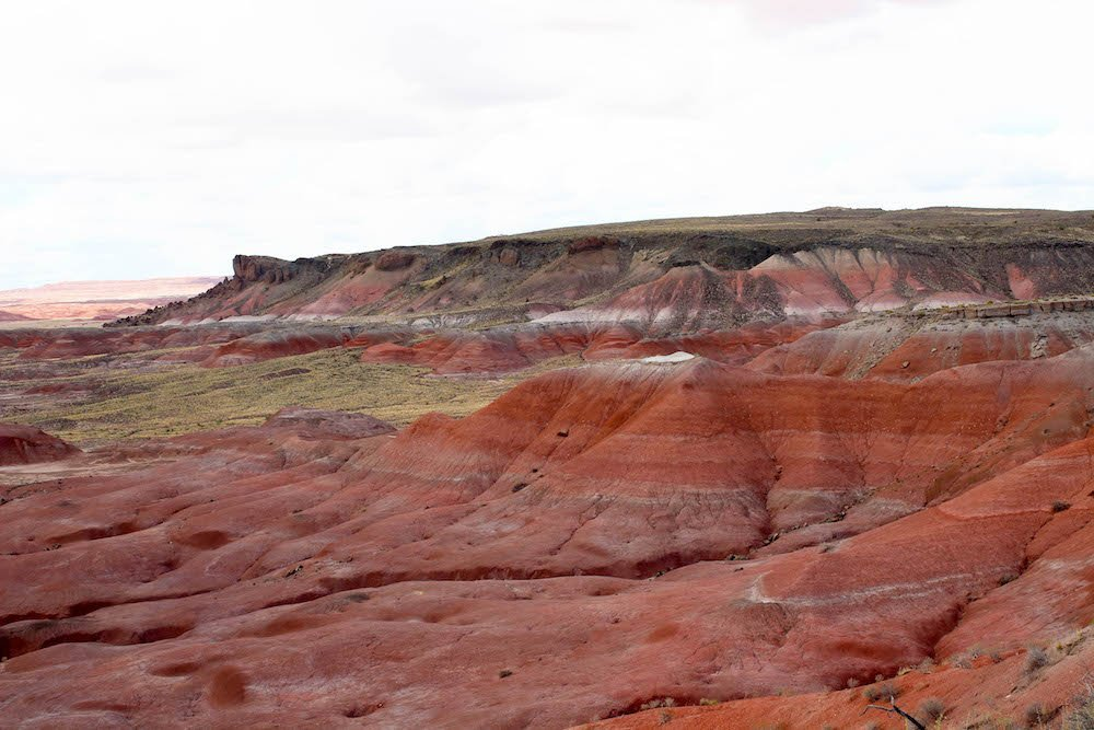 Red Rock Petrified Forest National Park Arizona USA.