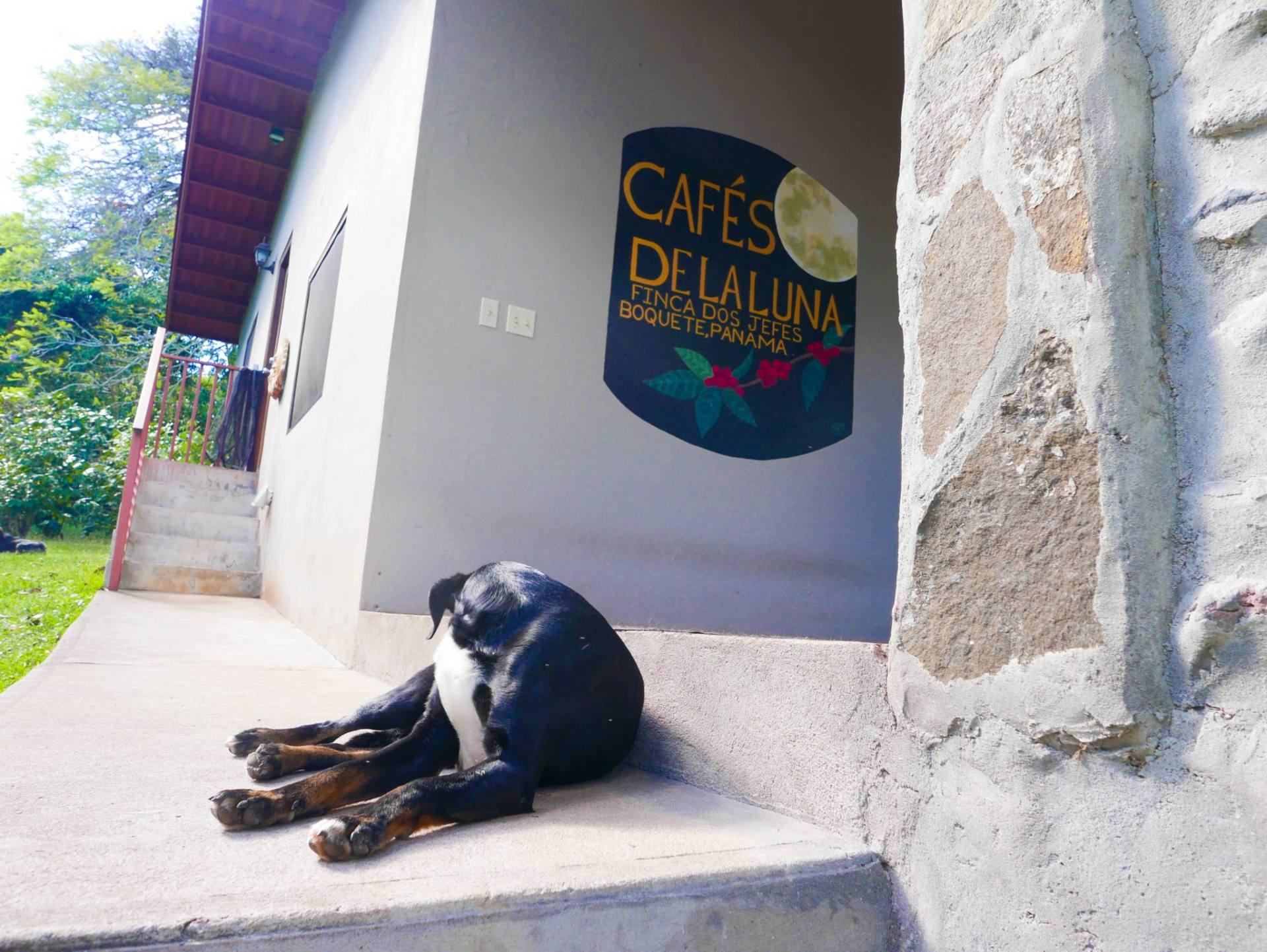 dog boquete coffee tour cafes de la luna