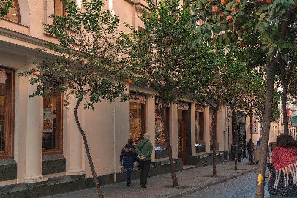Orange Trees along a street in Seville, Spain