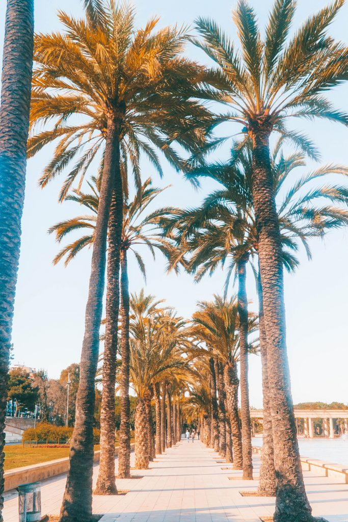 Palm trees along a path in the Turia park in Valencia